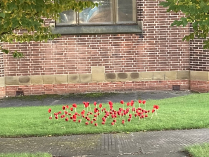 Kexborough Poppy Display
